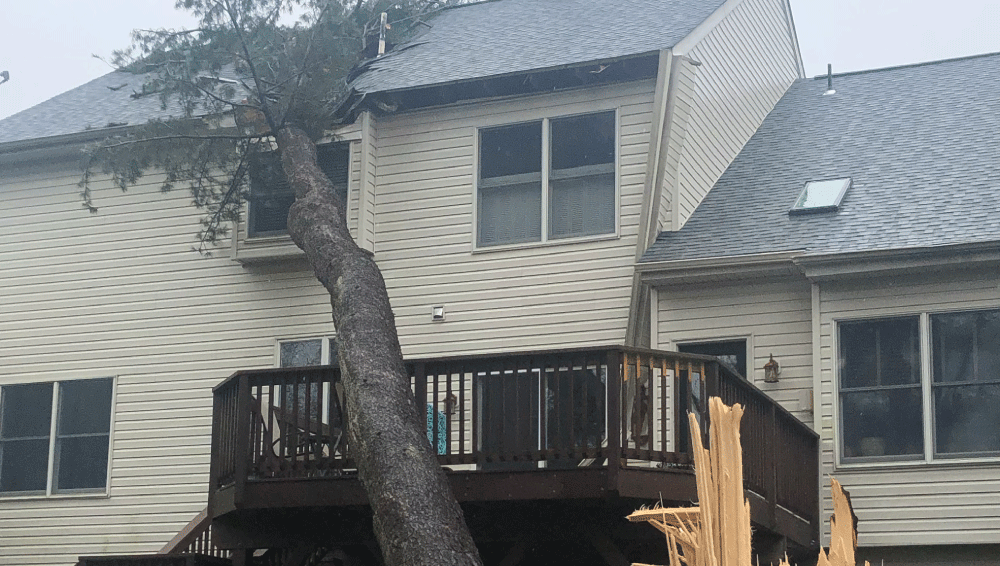 media content - tree on house